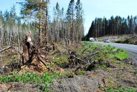 Defrişarea pădurilor